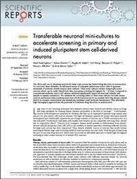 transferable neuronal mini cultures